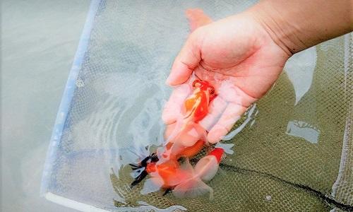 Fish Farm in China 11