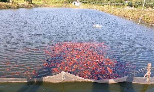 Fish Farm in China 6