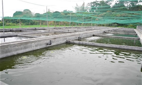 Fish Farm in China 3