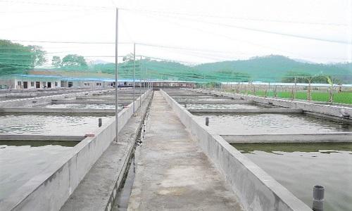Fish Farm in China 4