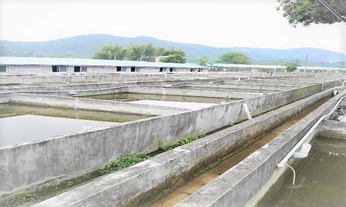 Fish Farm in China 5